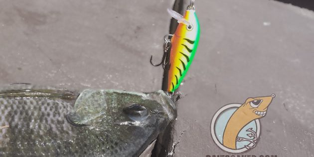 Sinking Lures – Secret to Catching More Fish!